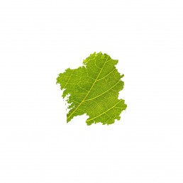 Museo do Viño (museo del vino). Logotipo treixadura, hoja.